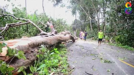 พายุฝนพัดกระหน่ำโค่นต้นยางพารา ใน จ.ระนอง เสียหายกว่า 500 ต้น