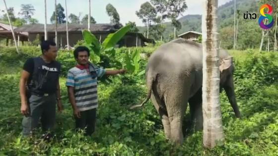 จับชายวัย 24 ปี ลักช้างจากสุรินทร์ออกเร่ร่อนในจังหวัดทางภาคใต้