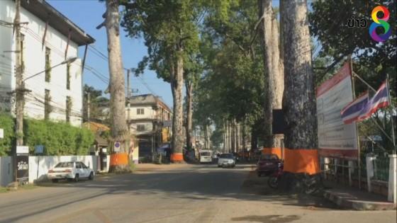 ชาวเชียงใหม่ช่วยกันอนุรักษ์ต้นยางนา ริม 2 ฝั่งถนนเชียงใหม่ – ลำพูน