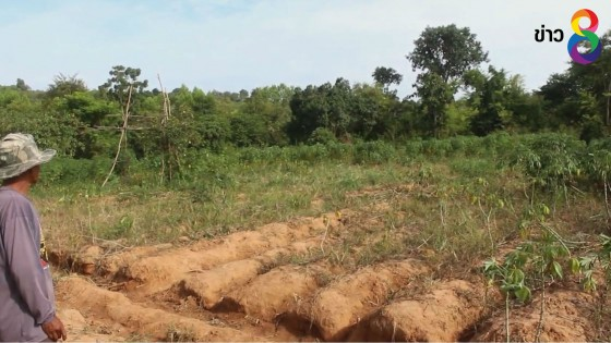 ช้างป่าทับลานยกโขลงบุกไร่สวนชาวบ้านเสียหายระนาวนานนับเดือน