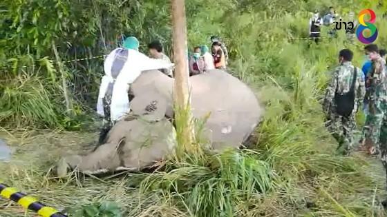 สลด!! แม่ช้างป่าแก่งกระจานแท้งลูกเสียชีวิตทั้งคู่