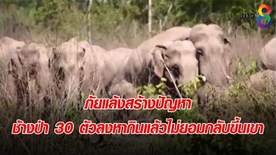 ภัยแล้งสร้างปัญหา ช้างป่า 30 ตัว ลงหากินแล้วไม่ยอมกลับขึ้นเขา