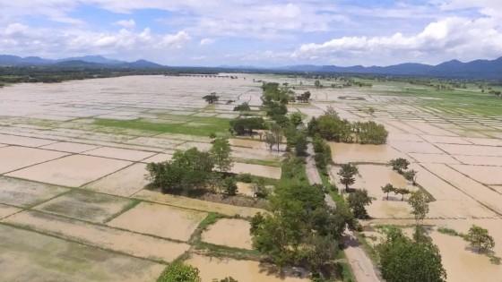 น้ำท่วมพื้นที่เกษตรจังหวัดพะเยา นับหมื่นไร่