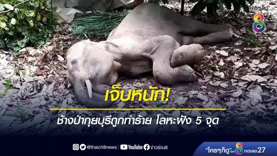 เจ็บหนัก! ช้างป่ากุยบุรีถูกทำร้าย โลหะฝัง 5 จุด