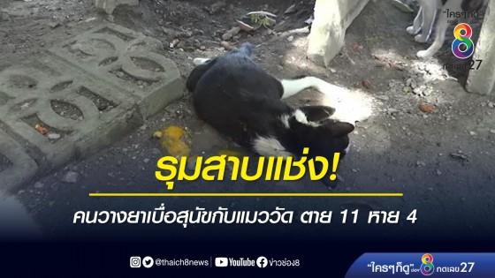 รุมสาบแช่ง! คนวางยาเบื่อสุนัขกับแมววัด ตาย 11 หาย 4