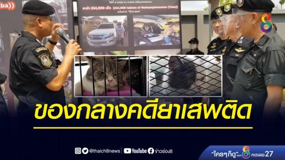 """ตำรวจ ปส. ขยายผลจับแก๊งยาเสพติด """"กุ๊ก ระยอง"""" ยึดทรัพย์ 35 ล้าน แมว 6 ตัว"""