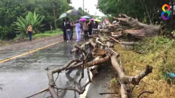 ฝนตกหนักทำต้นไม้ใหญ่หักทับสาวขี่ จยย. เสียชีวิตคาที่