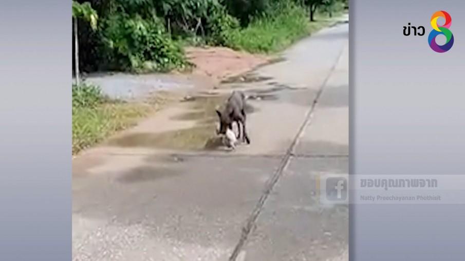 (คลิป) แม่หมาคาบลูกทีละตัว พาหนีน้ำท่วม