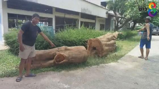 ชาวบ้านโวยถูก ผอ.รร.แจ้งจับ หลังร่วมลงมติขายไม้พะยูงล้มที่ทับโรงเรียน