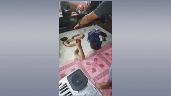 คลิป หนุ่มโชว์จับงูจงอางยักษ์ด้วยมือเปล่าข้างเดียว