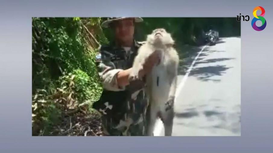 ลิงเกาะช้างถูกรถชนสาหัส ช่วยเหลือไม่ทัน สุดท้ายตาย