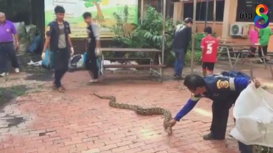 งูเหลือมยักษ์ ยาวกว่า 4 เมตร โผล่ห้องสอบ โรงเรียนดังอ่างทอง