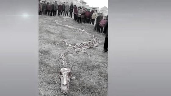 แตกตื่น!! ชาวบ้านจีนพบซากโครงกระดูกคล้ายมังกร