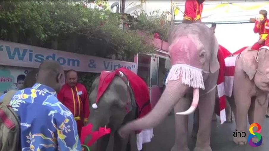 ช้างอยุธยาแต่งซานตาครอสสร้างความสุขให้กับเด็ก