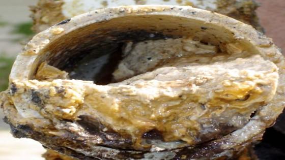 อังกฤษจัดแสดงก้อนไขมันยักษ์จากท่อน้ำทิ้งในพิพิธภัณฑ์...