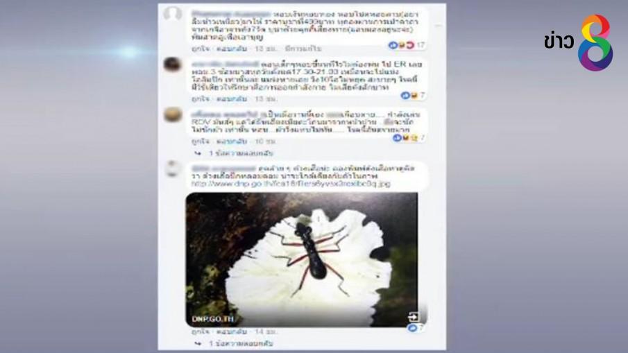 """แชร์ว่อนเน็ต """"แมลงหอบ"""" ช่วยรักษาโรคหอบหืดได้"""