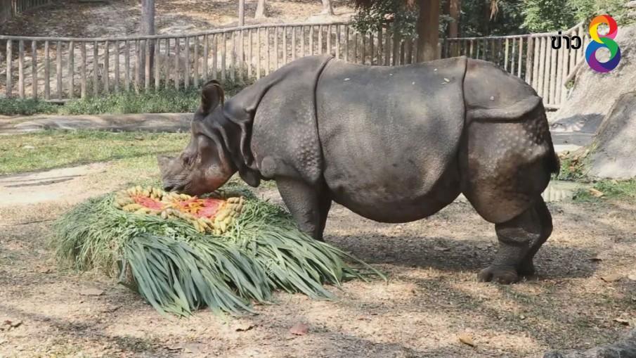 """สวนสัตว์เชียงใหม่ มอบขันโตกผัก-ผลไม้รูปหัวใจให้""""กาลิ""""แรดอินเดีย ครองโสดนานกว่า 16 ปี"""