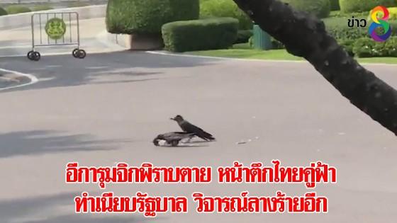 อีการุมจิกพิราบตาย หน้าตึกไทยคู่ฟ้า ทำเนียบรัฐบาล วิจารณ์ลางร้ายอีก
