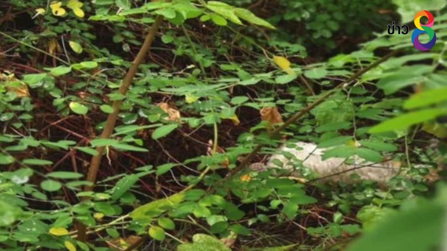 เร่งล่าตัวหนุ่มโหดจับลูกแมวฟาดกับขอนไม้ ก่อนโยนทิ้ง