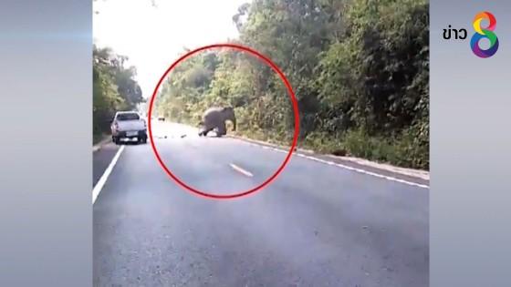 ยุติภารกิจหลังค้นหาช้างป่าบาดเจ็บวันที่สอง แต่ไม่พบ