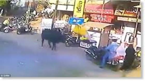 นาทีวัวคลั่งขวิดหญิงอินเดียเดินถนนตัวลอย (คลิป)
