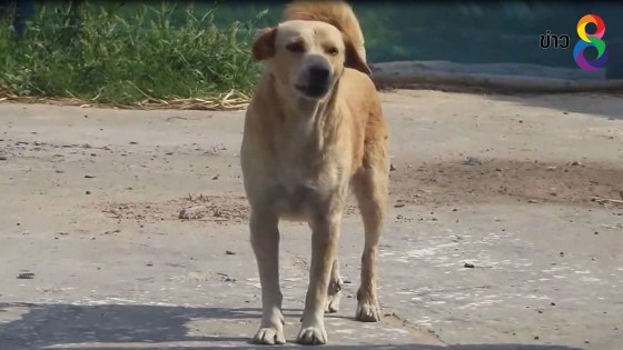 สปส.แนะผู้ประกันตนถูกสุนัขกัดใช้สิทธิ์ฯได้ ไม่เสียค่าใช้จ่าย