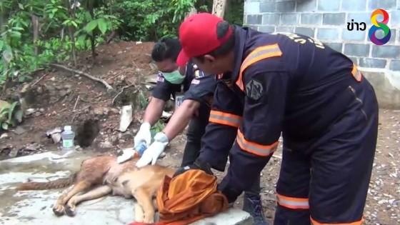 สุนัขถูกฝูงลิงป่ารุมกัดเป็นแผลฉกรรจ์ เจ้าหน้าที่พาไปรักษา