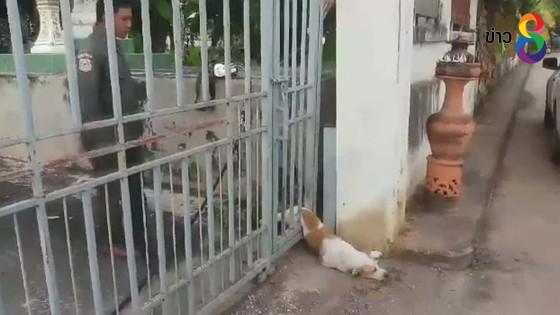 กู้ภัยช่วยสุนัข ลำตัวติดประตูรั้ว