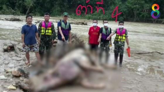 น้ำป่าหลากซัดซากกระทิงทุ่งใหญ่  4  ตัว ตายเกลื่อนห้วยรันตี