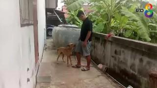 แจ้งข้อหาเจ้าของสุนัข  3  ตัว รุมกัดเด็กหญิง 4  ขวบ เสียชีว...