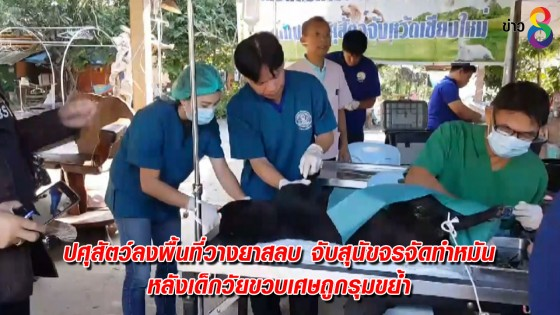 ปศุสัตว์ลงพื้นที่วางยาสลบจับสุนัขจรจัดทำหมัน หลังเด็กวัยขวบเศษถูกรุมขย้ำ