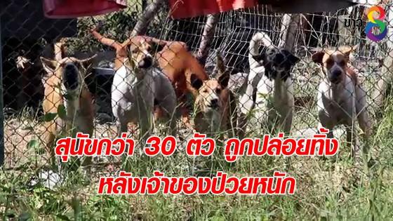 สุนัขกว่า 30 ตัว ถูกปล่อยทิ้ง หลังเจ้าของป่วยหนัก