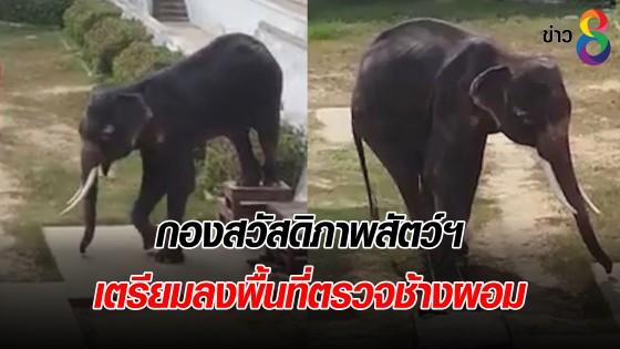 กองสวัสดิภาพสัตว์ฯ เตรียมลงพื้นที่ตรวจช้างผอม