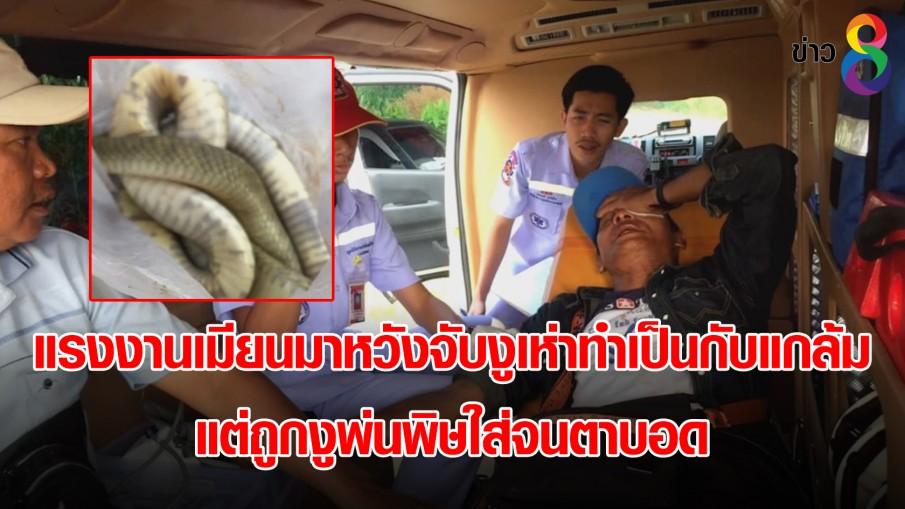 แรงงานเมียนมาหวังจับงูเห่าทำเป็นกับแกล้ม แต่ถูกงูพ่นพิษใส่จนตาบอด
