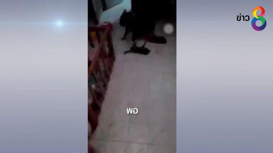 ออกหมายเรียกตัวคนโพสต์คลิปสุนัขกัดลูกแมวจนตาย
