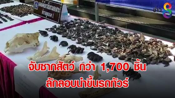 จับซากสัตว์ กว่า 1,700 ชิ้น ลักลอบนำขึ้นรถทัวร์