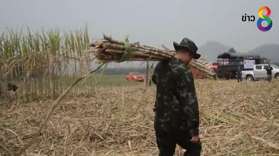 ผบ.มทบ.28 นำกำลังพลช่วยเกษตรกรตัดอ้อยสด ลดโลกร้อน
