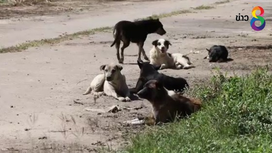 กทม.เตรียมฉีดวัคซีนโรคพิษสุนัขบ้าให้สัตว์เลี้ยง...