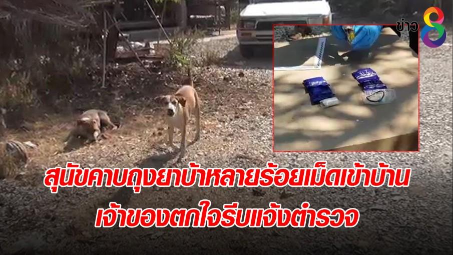 สุนัขคาบถุงยาบ้าหลายร้อยเม็ดเข้าบ้าน เจ้าของตกใจรีบแจ้งตำรวจ