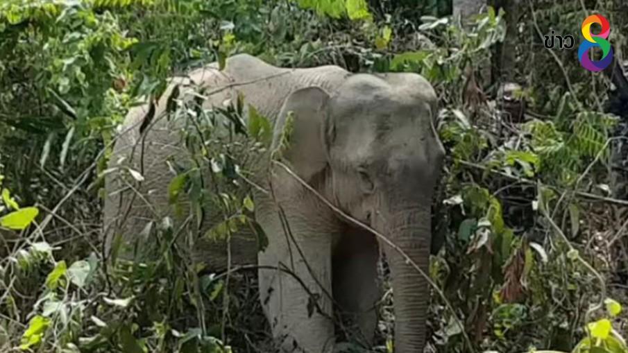 กรมอุทยานฯ รณรงค์หยุดใช้กับดักสัตว์รับวันช้างไทย