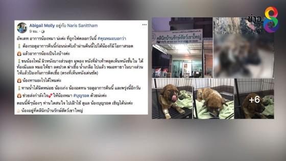 กู้ภัยโพสต์ชาวบ้านเผาป่า คลอกสุนัขตาย-บาดเจ็บ