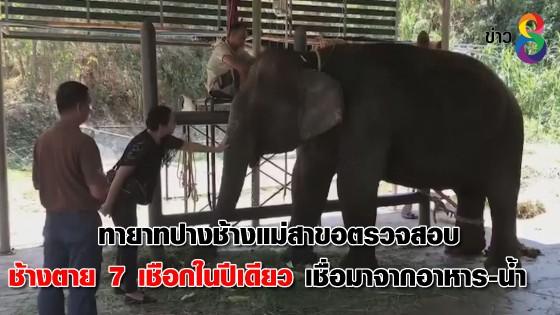ทายาทปางช้างแม่สาขอตรวจสอบช้างตาย 7 เชือกในปีเดียว เชื่อมาจากอาหาร-น้ำ...
