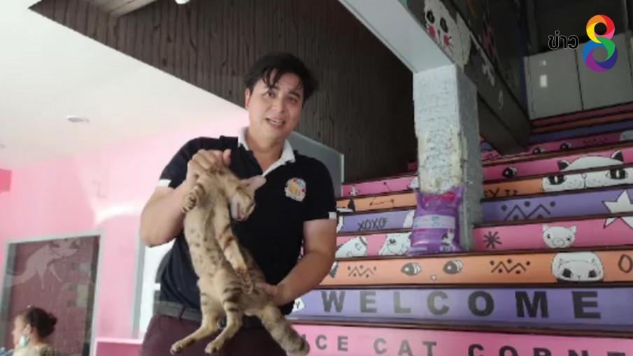 บุกช่วยแมวจากคาเฟ่แมวกลางกรุง พบทารุณสัตว์ เพาะพันธุ์แมวแปลก