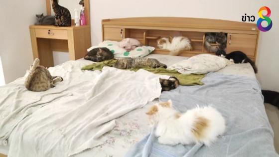 สมาคมป้องกันทารุณสัตว์ ร้องปศุสัตว์ ตรวจสอบคาเฟ่แมว