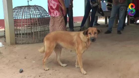 ปศุสัตว์ตรวจสอบหญิง 59 ปี ถูกหมากัดไปหาหมอผีก่อนสิ้นใจ