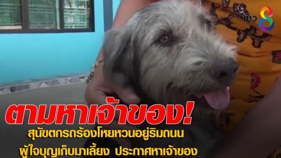 สุนัขตกรถร้องโหยหวนอยู่ริมถนน ผู้ใจบุญเก็บมาเลี้ยง...