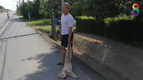 สุดเศร้า สุนัขวิ่งตามเจ้าของ ถูกรถชนตายต่อหน้าต่อตา