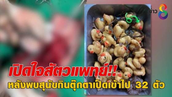 เปิดใจสัตวแพทย์!! หลังพบสุนัขกินตุ๊กตาเป็ดเข้าไป 32 ตัว
