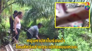 หนุ่มหาปลาในร่องน้ำ โดนสัตว์คล้ายจระเข้กัดแขนเหวอะ