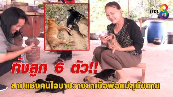 สาปแช่งคนใจบาปวางยาเบื่อพ่อแม่สุนัขตาย ทิ้งลูก 6 ตัว